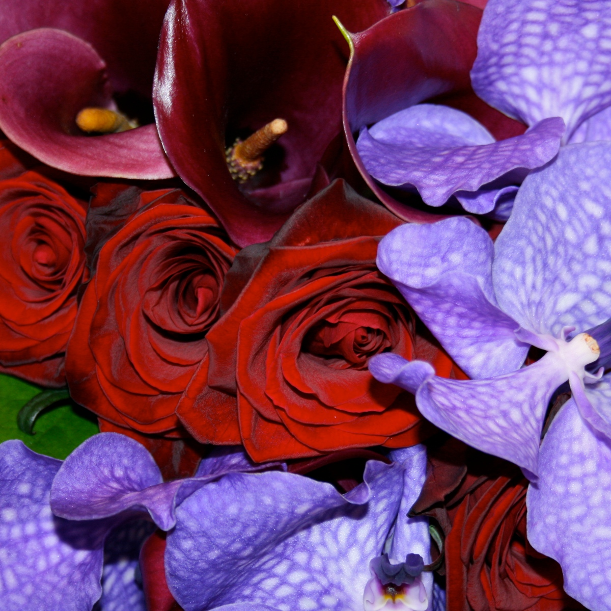 Popular orchid for wedding flowers in deep purple