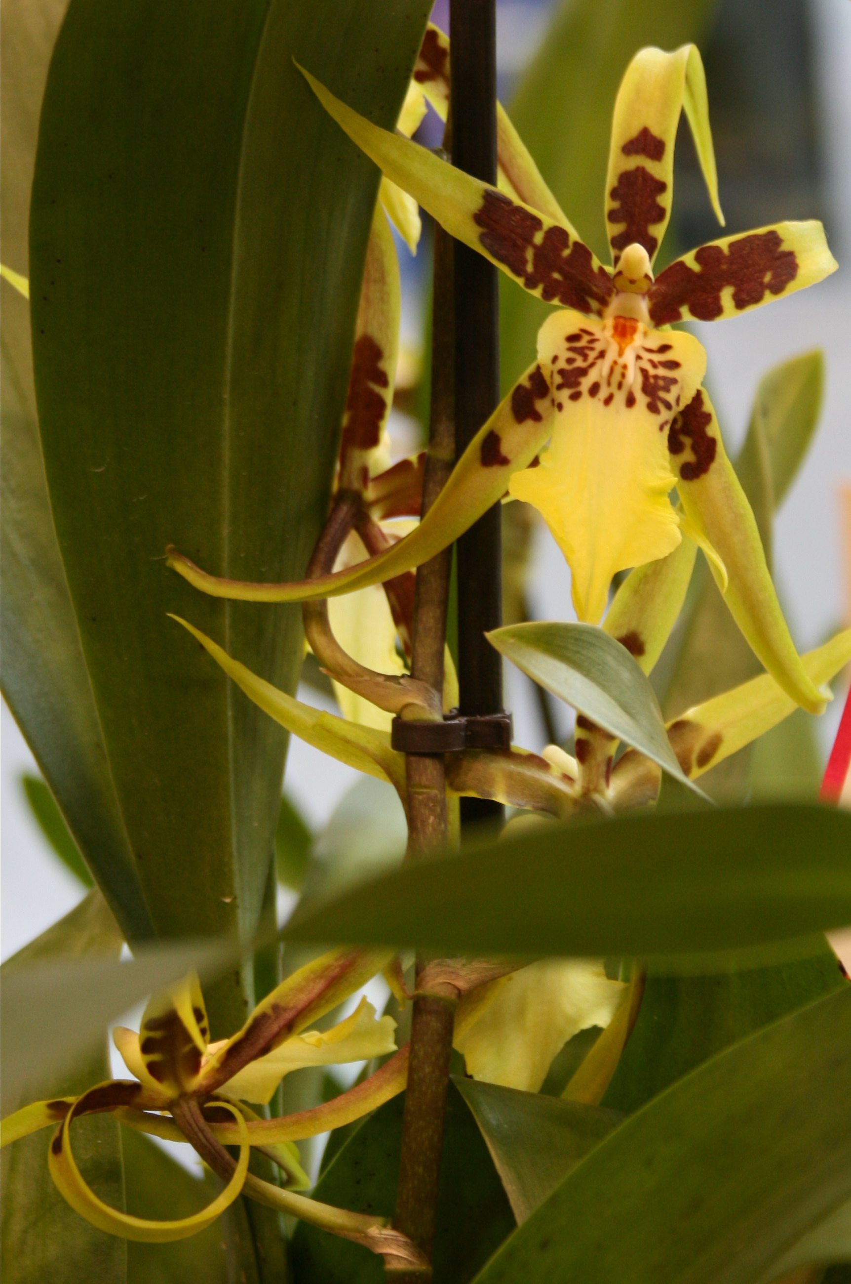 Orchid Plants A Perfect House Plant Lamberdebie S Blog